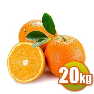 20Kg of oranges for dessert Barberina