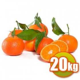 20kg Mandarinen Clemenvilles