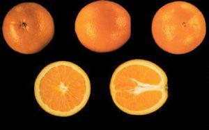 comprar naranjas valencia