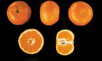 naranjas por internet