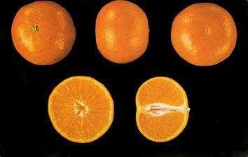 naranjas a domicilio